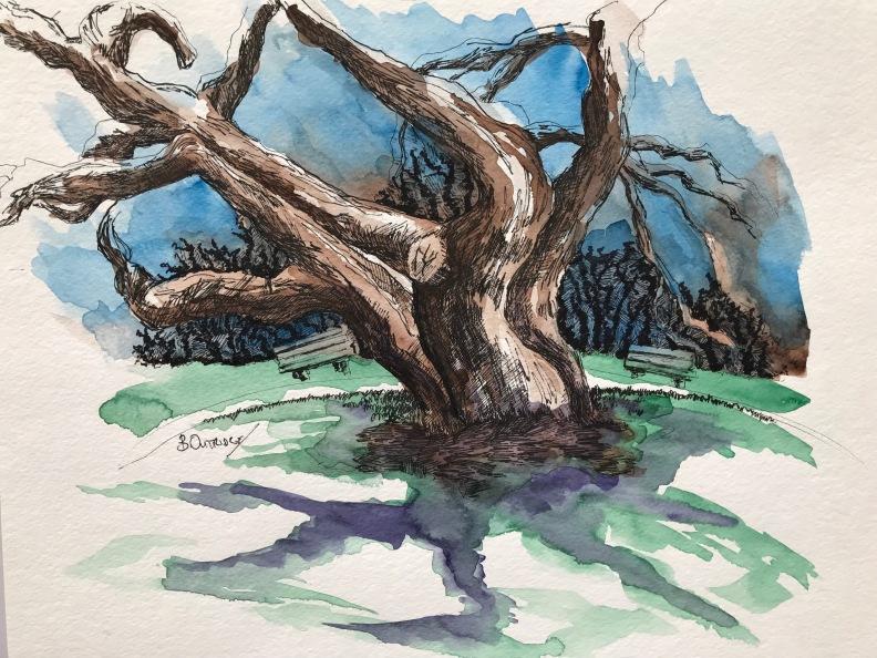 Confederation Park Tree