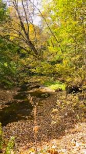 Creek Scene